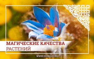 Магические качества растений. Применение растений для эзотерических обрядов и целительства